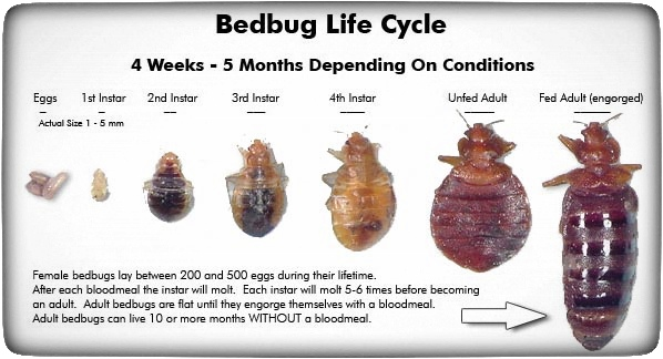 Bedbug Info Socal K9 Detection
